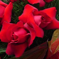rosas-colombianas