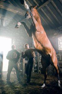 cavalo-de-guerra-2011_04