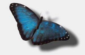 para-sempre-alice_borboleta